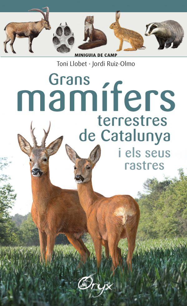 Grans mamífers terrestres de Catalunya i els seus rastres