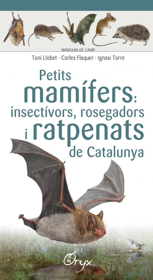 Petits mamífers: insectívors